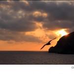 IMG_0814-ischia