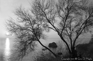 Foto di Gino Di Meglio